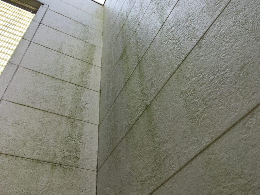 緑汚れのある外壁画像